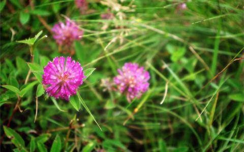 Flowers #36