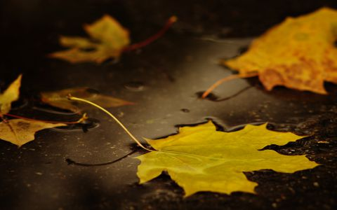 Желтое на черном -- осень